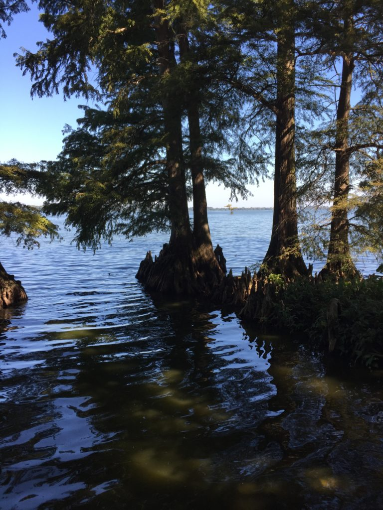 Reelfoot Lake Trees in Water - year of the dad